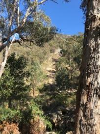Eucalyptus Trees Abound