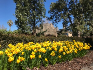 The daffies are out!