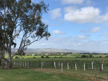 McLaren Vale Landscape 1