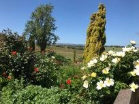 McLaren Vale Landscape 3