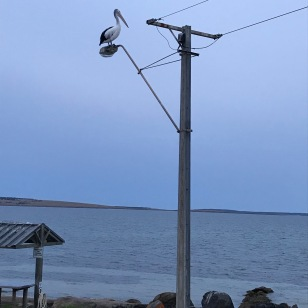 Pelican Fishing Pole