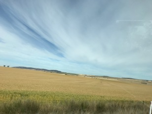 Fields of Barley and Wheat All Around
