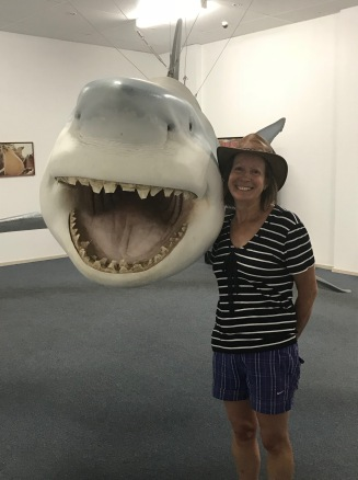Sheila and the Smiley Shark!