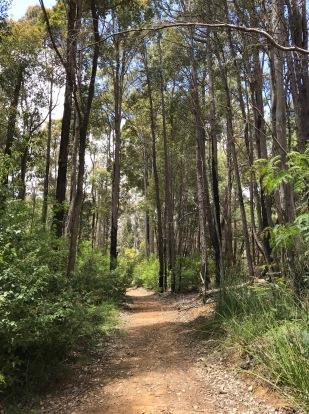 Jarrah and Karri Trees