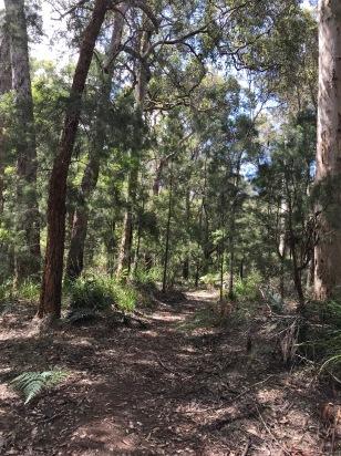 Karri and Jarrah Trees