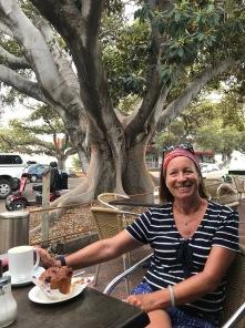 Chilling under Morton Bay Fig Trees