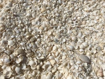 Close Up Of The Beach - No Sand