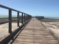 Along the Boardwalk at Hamelin Pool