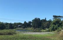 Mackay (pronounced Mc-Eye) Botanic Gardens