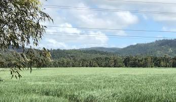 Sugarcane Landscape