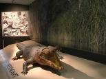 Crocodile named Sweetheart
