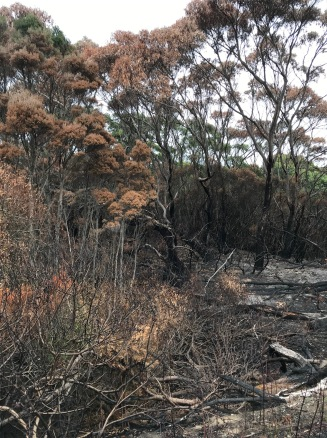 Arthur River Forest Fire